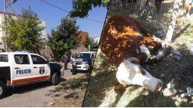 Un toro hirió a 4 personas y causó pánico en Quilmes