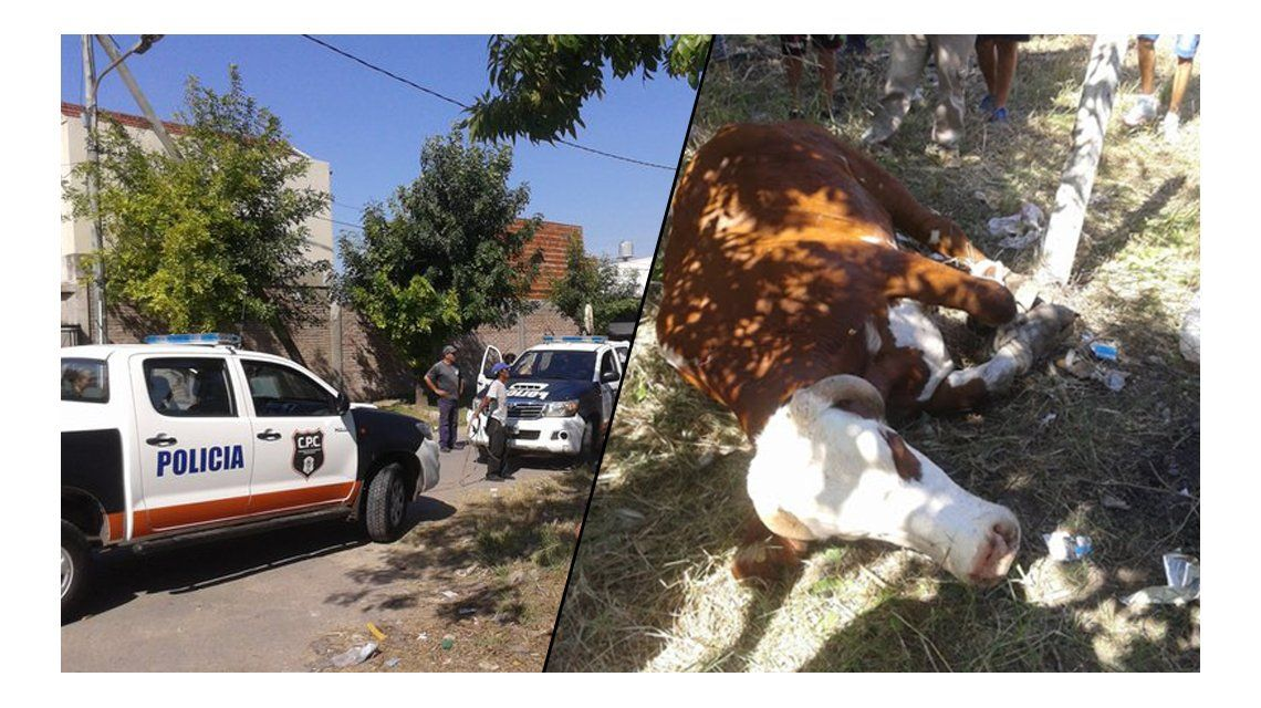 Un toro hirió a cuatro personas y causó pánico en Quilmes