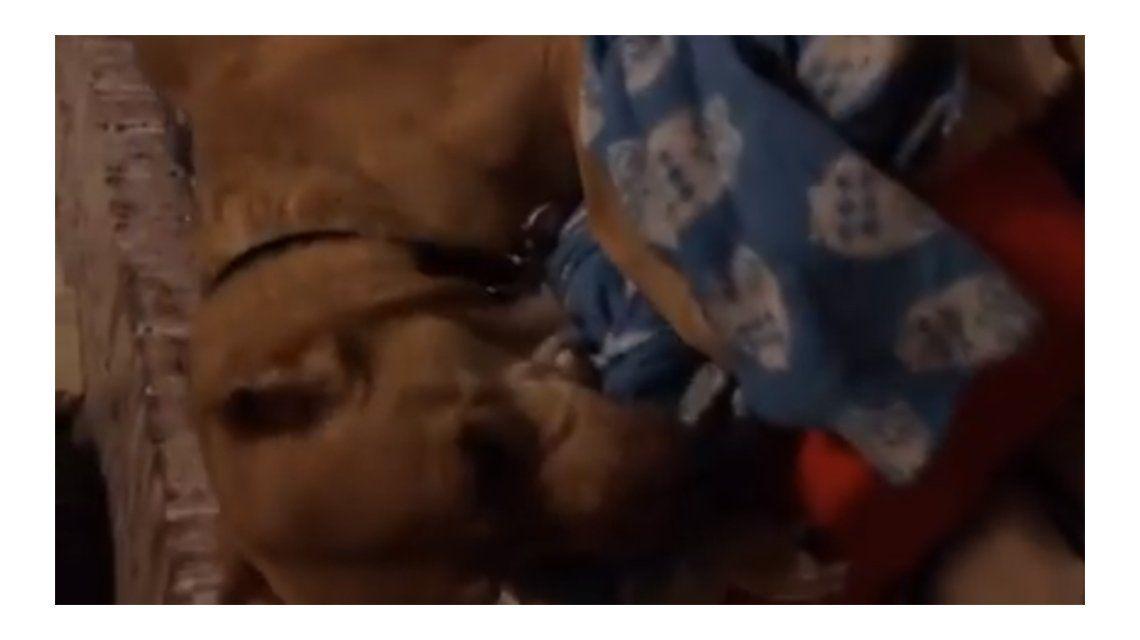 El perro más triste del mundo: llora sobre su manta tras ser abandonado una vez más