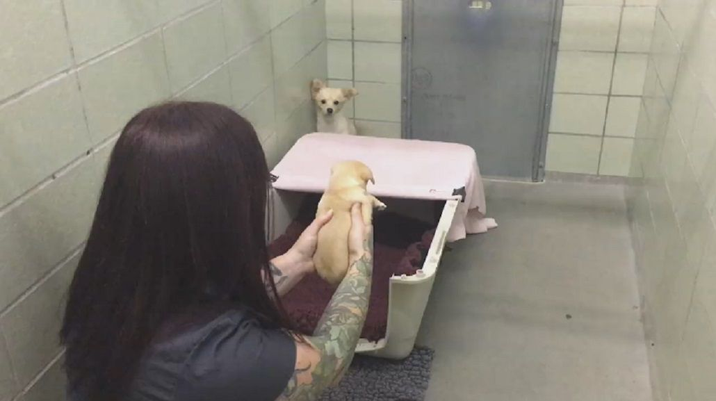 Pura ternura: reúnen a una perra con sus cachorros después de ser abandonados
