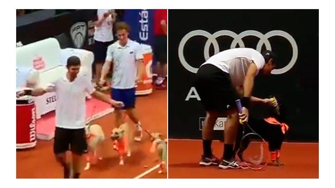 Los perros alcanza pelotas se robaron el show en el abierto de tenis de Brasil