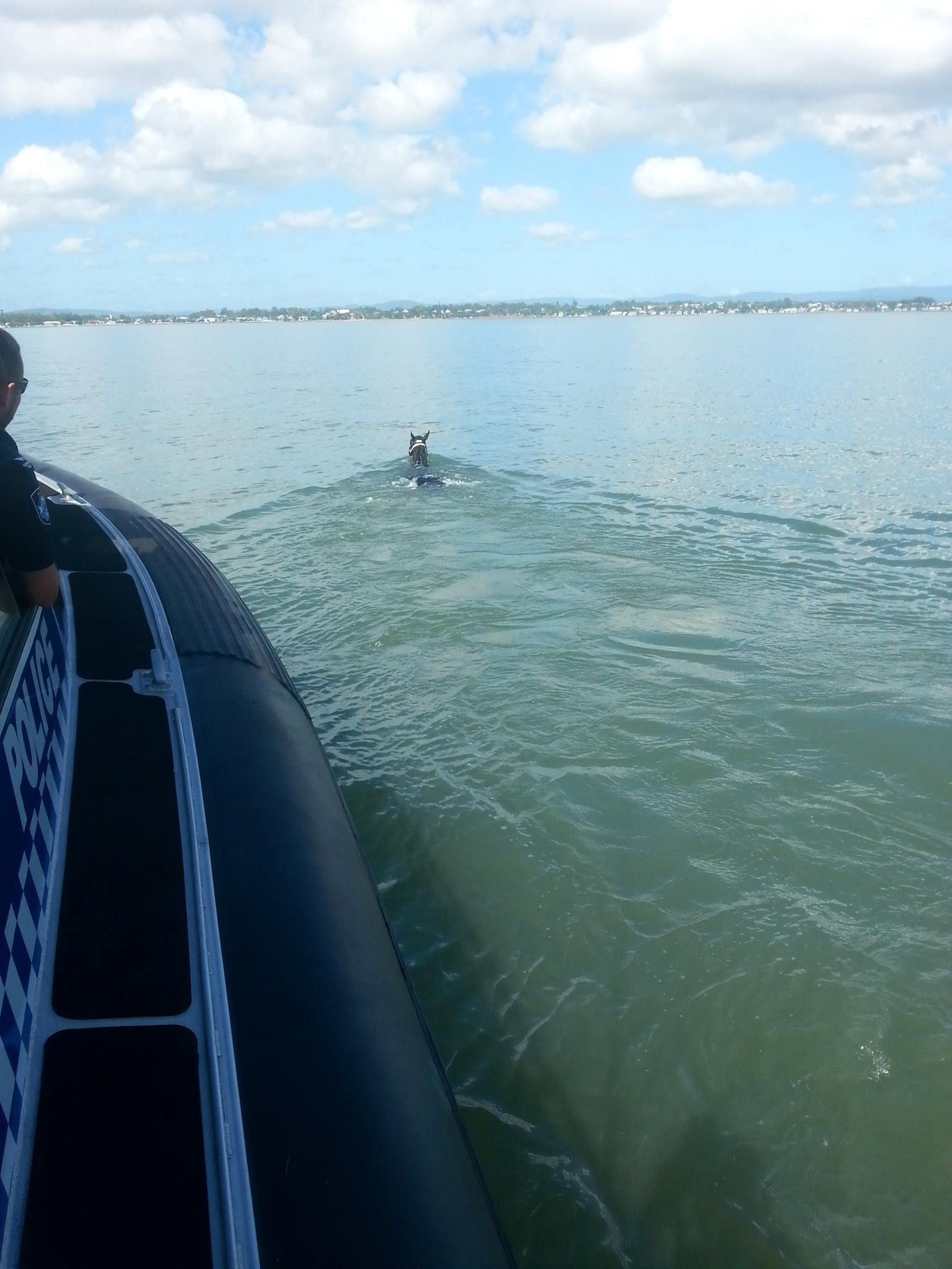 Rescataron sano y salvo a un caballo que nadó 11 kilómetros en el mar