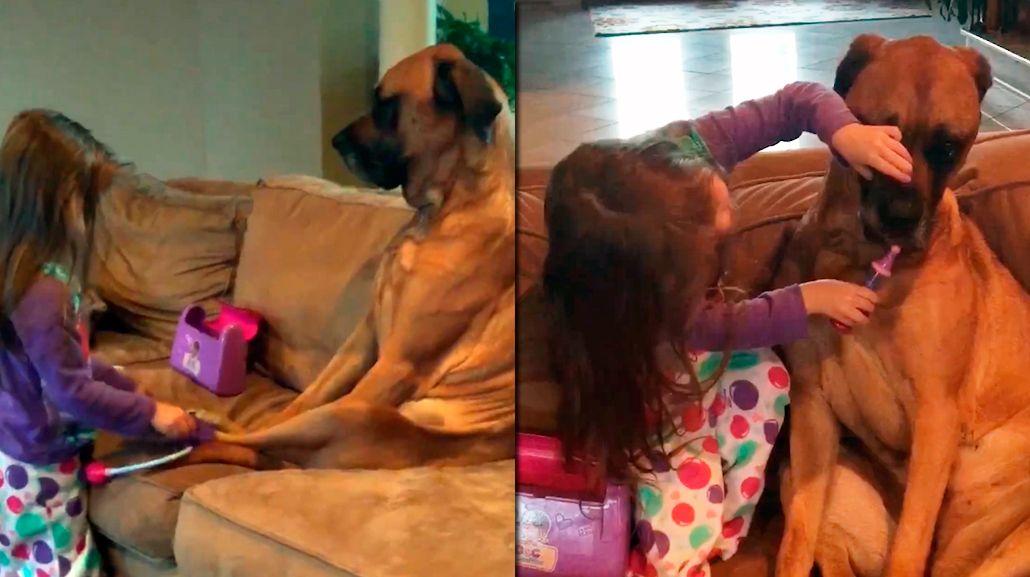 Una nena juega al doctor con su perra y le da un pico de ternura a la web
