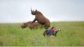El fotógrafo contó la historia sobre la imagen de los rinocerontes amorosos