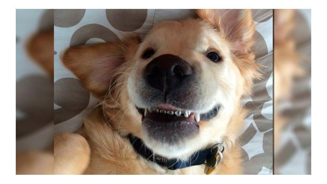 Curioso: este perro no podía cerrar la boca y le pusieron ortodoncia