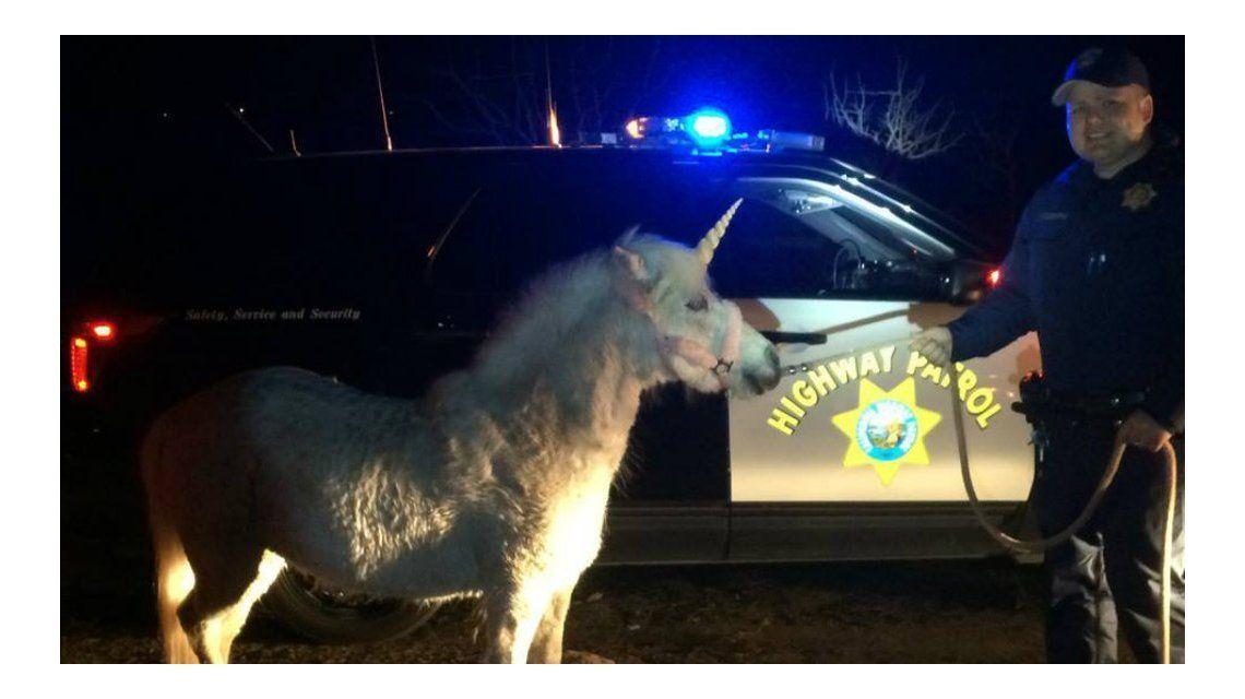 Capturaron a un supuesto unicornio después de tres horas de persecución
