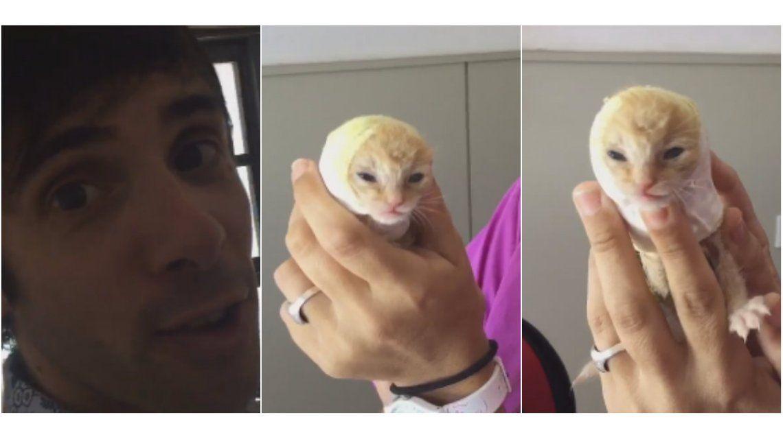 Video: así se recupera la gatita que rescató Robertito Funes