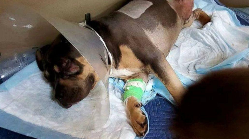 Un perro sobrevivió tras ser arrollado por 13 trenes a lo largo de todo un día