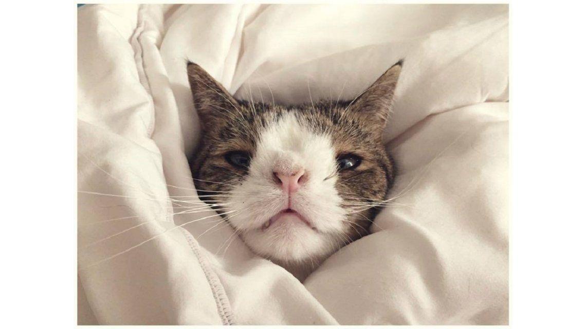 Conocé al gato con síndrome de Down que alcanzó la fama en las redes sociales