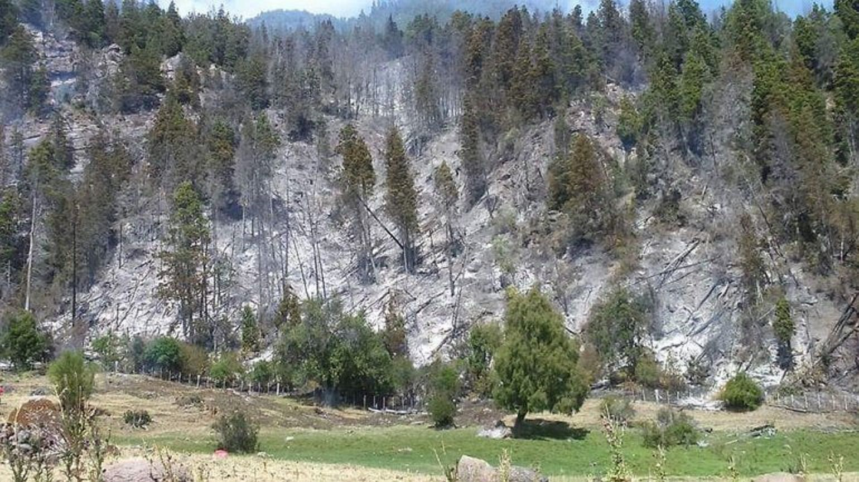 Nuevo incendio forestal en la cordillera: sospechan que fue intencional