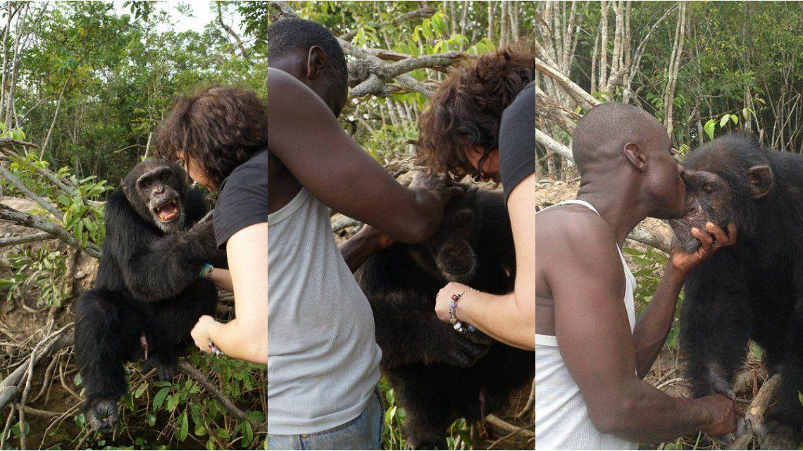 El chimpancé más solitario del mundo por fin hizo nuevos amigos