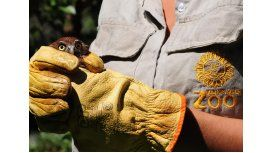 El Zoológico porteño liberará aves rapaces