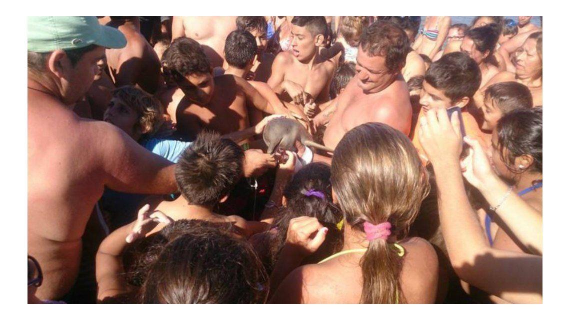 Sacaron a un delfìn bebé del mar y lo mataron por sacarse una selfie