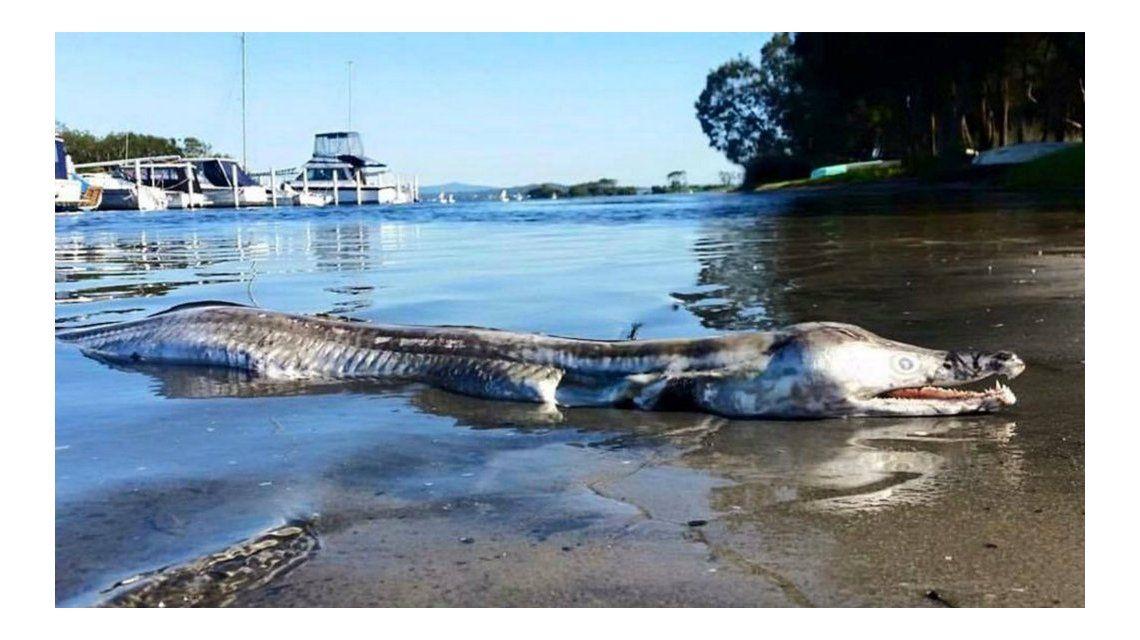 Conmoción en Australia por la aparición de un extraño monstruo marino