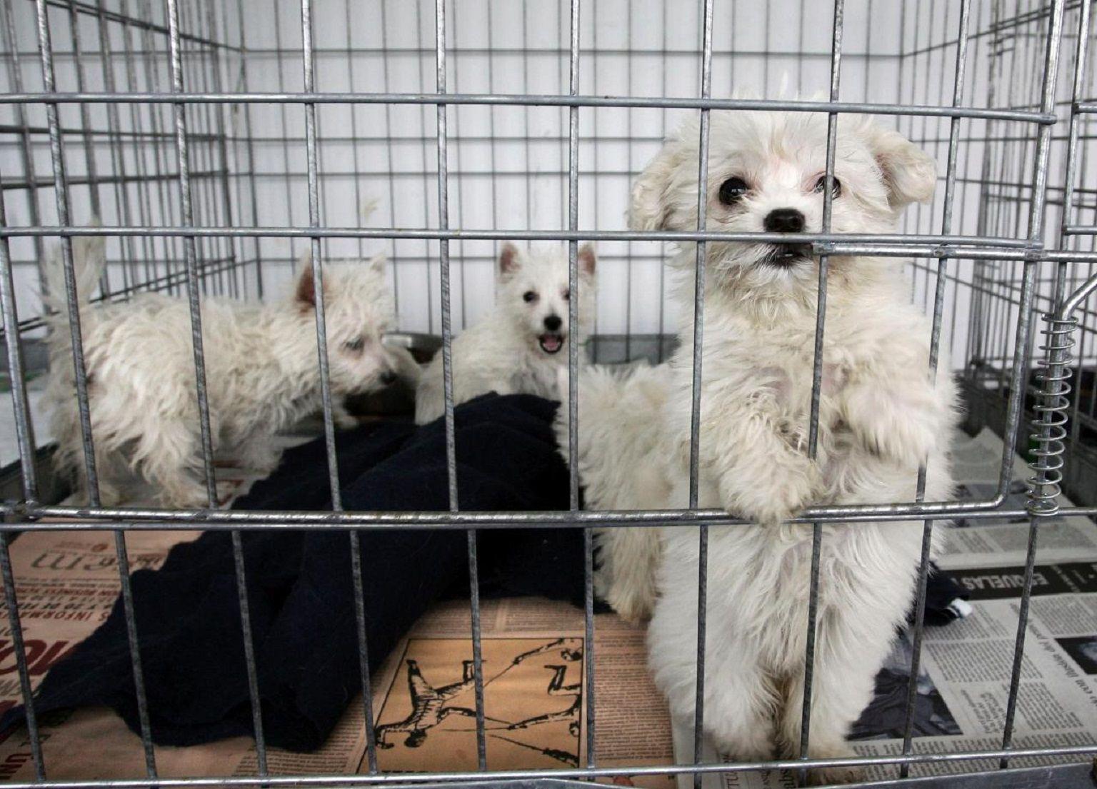 Polémica: reclaman que se prohíba la venta de mascotas por internet