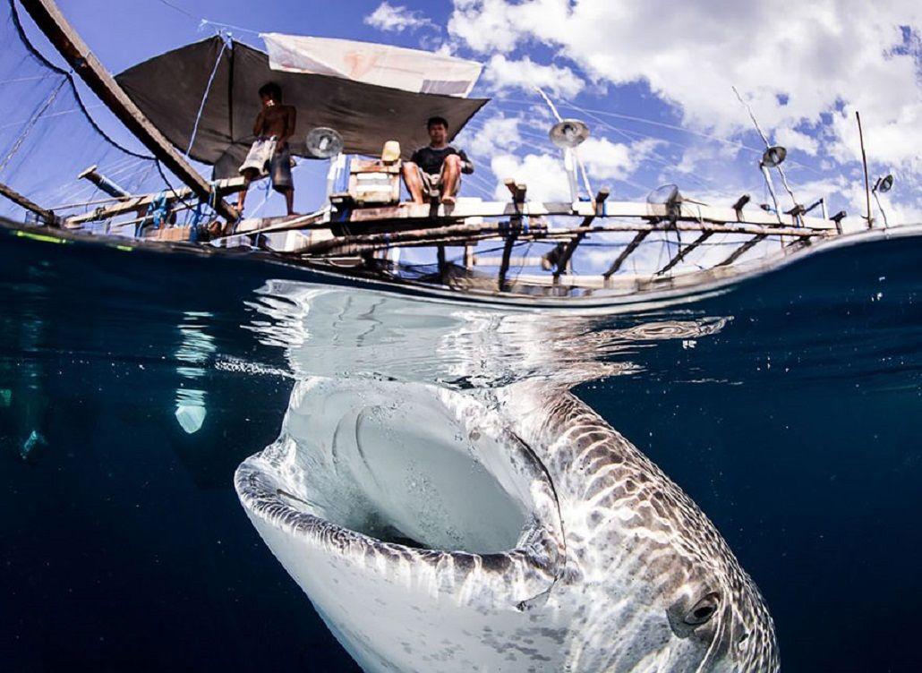 10 espectaculares fotos tomadas entre la superficie y el agua