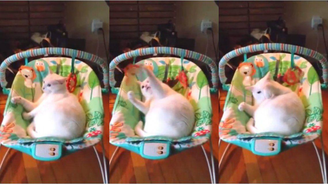 Un gato le robó su lugar al bebé de la casa y disfrutó de los beneficios