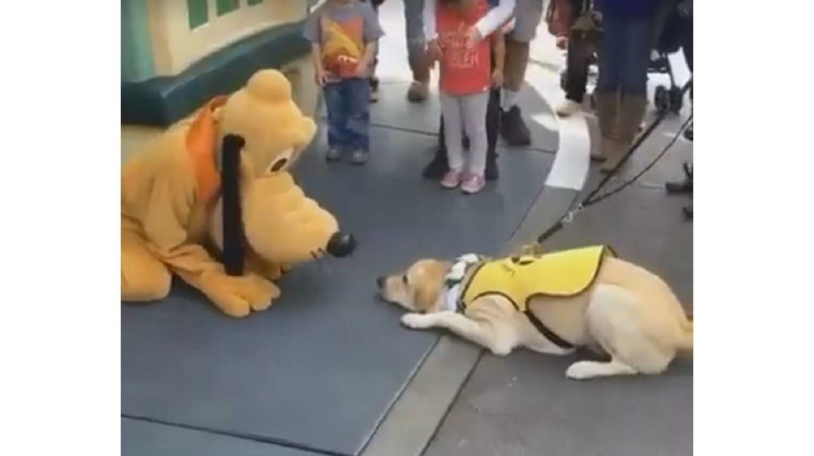 Viral del día: mirá la tierna reacción de un perro guía cuando conoció a Pluto