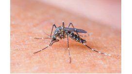 Aprobaron la primera vacuna contra el dengue en más de 100 países