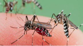 Los mosquitos este año llegan antes de tiempo.