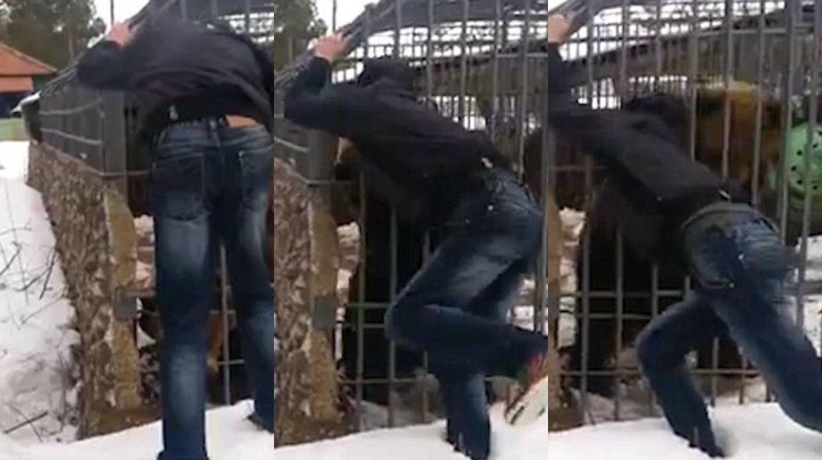 Un borracho quiso acariciar a un oso y perdió la mano de un mordisco