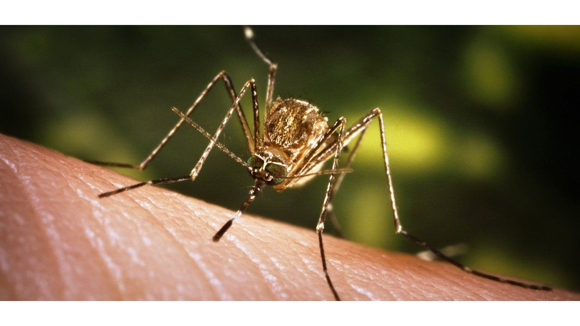 OMS declara al virus de Zika emergencia sanitaria mundial