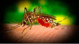 Un mosquito, tres enfermedades: ¿por qué?