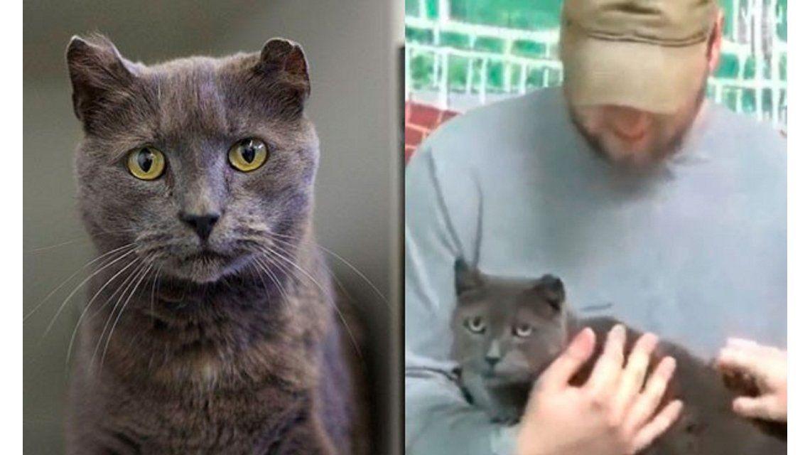 Una gata huyó de su casa para buscar a su dueño y lo encontró 4 años después