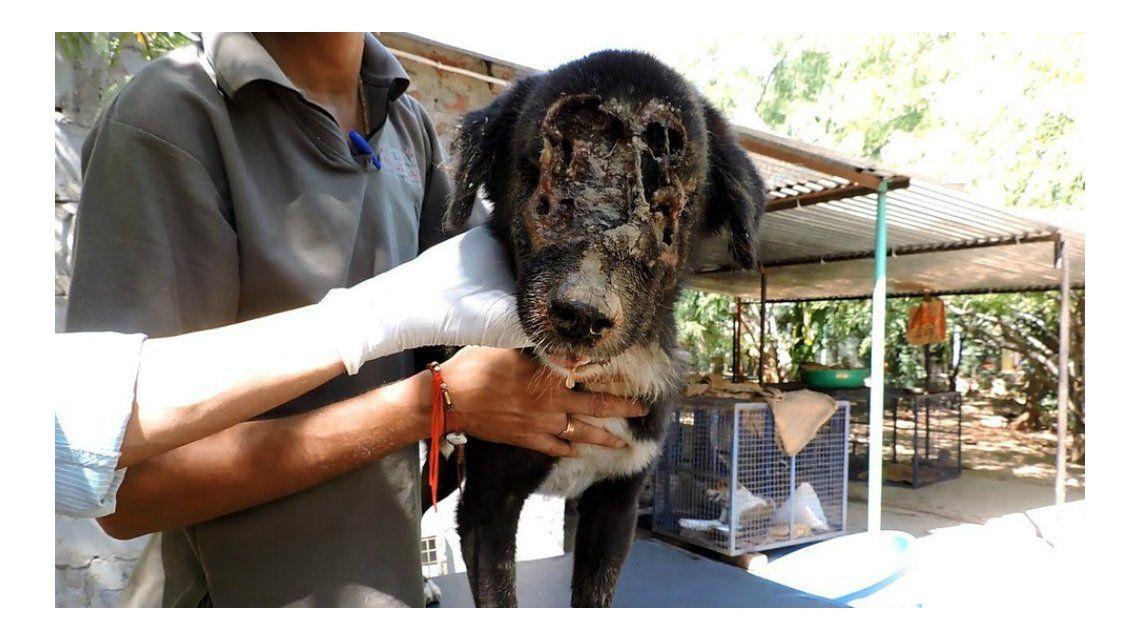 Rescatan y logran salvar a un perro que se había quedado sin cara