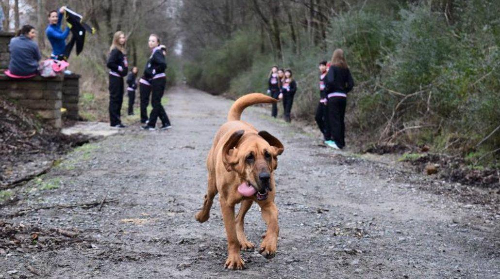 Una perra se coló en una media maratón y terminó en séptimo lugar