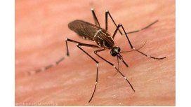 Llega el dengue y los municipios empiezan con la prevención