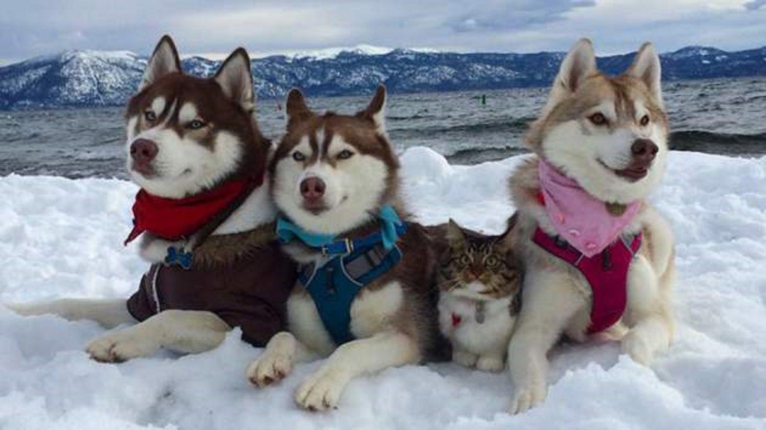 Tres perros se convierten en los mejores amigos de un gato tras salvarle la vida