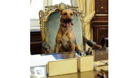 ¿Dónde está Balcarce, el perrito PRO?