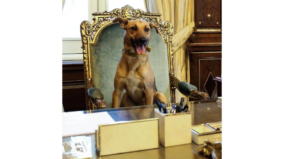 ¿Dónde está Balcarce, el perrito PRO de Macri?