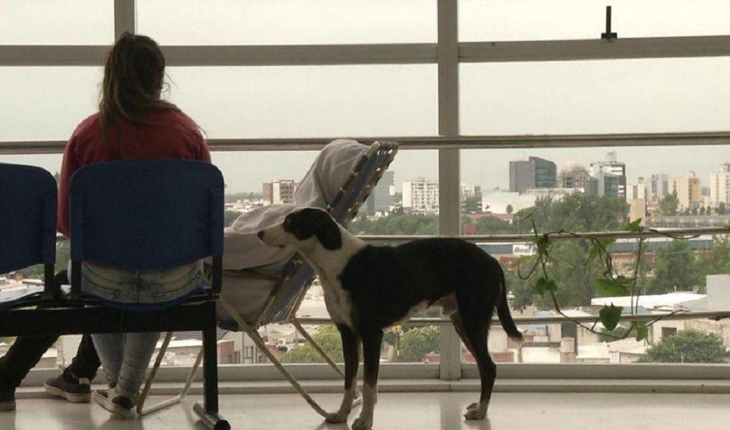 Conmovedor: un perro busca a su dueño fallecido en un hospital