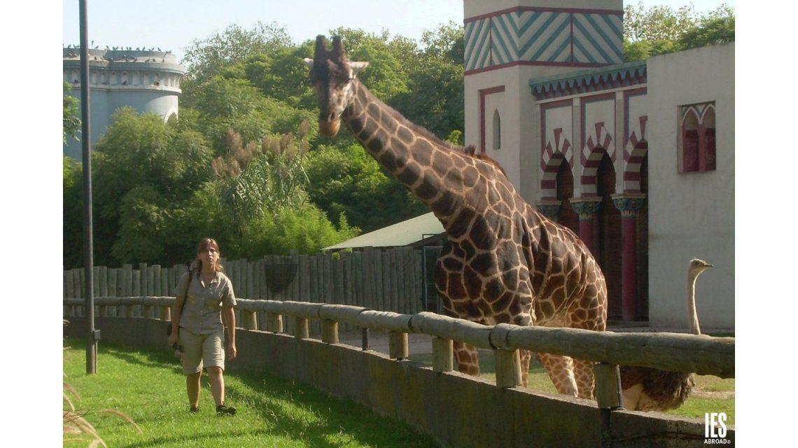 En Radio 10, el director del zoológico porteño descartó su cierre
