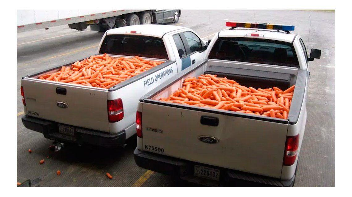 Zanahorias verdes: secuestran una tonelada de marihuana escondida en falsas hortalizas