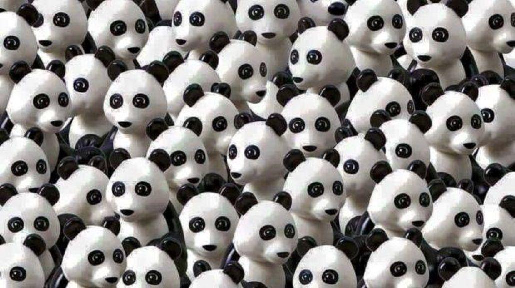 El nuevo desafío de Facebook: encontrar a un perro entre pandas