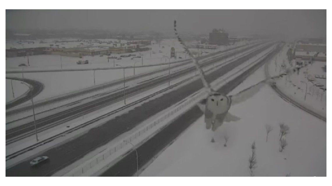Una pareja de búhos blancos conquistaron a los habitantes de Montreal