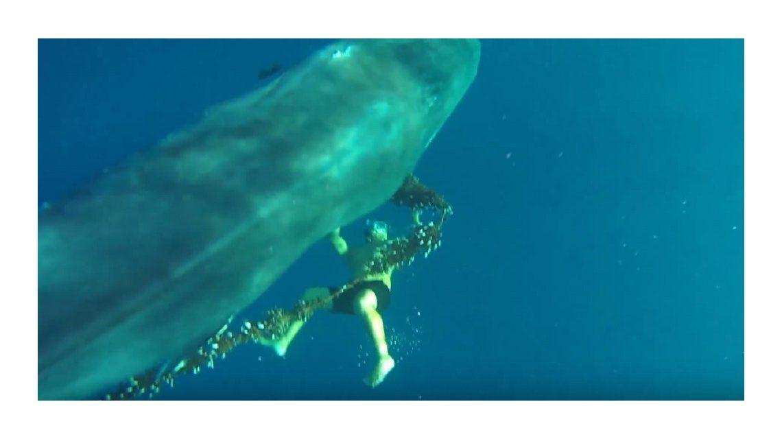 Liberó a una ballena encerrada en una red