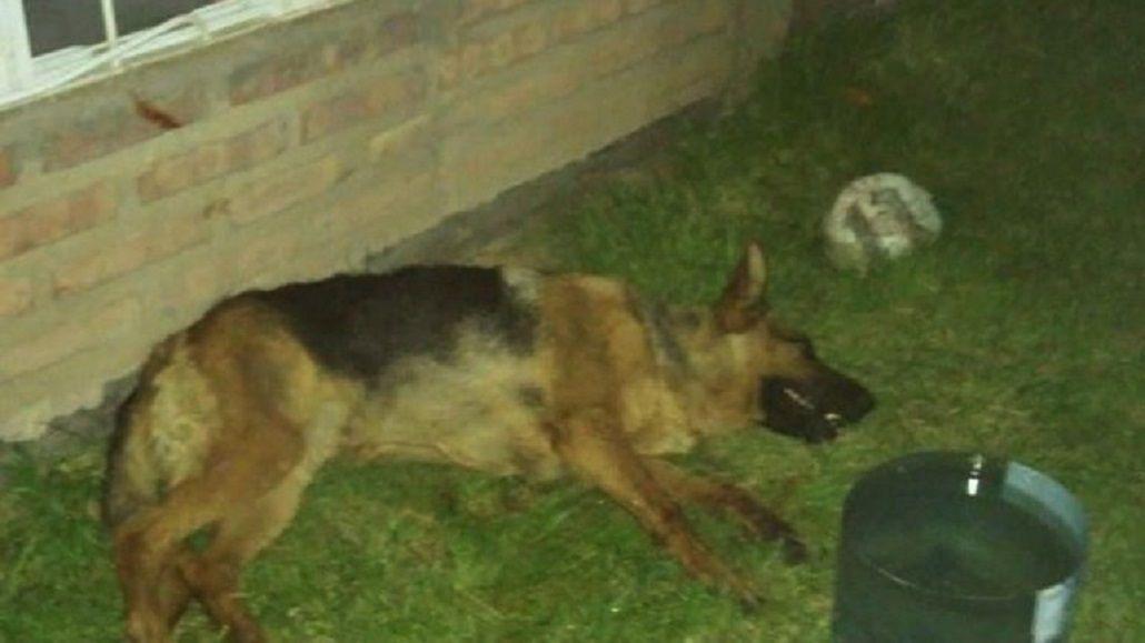 Dos perras murieron de un infarto por los fuegos artificiales