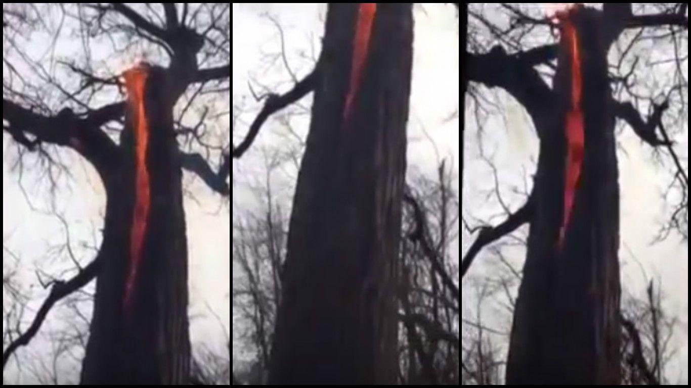 El misterio del diabólico árbol que arde por dentro
