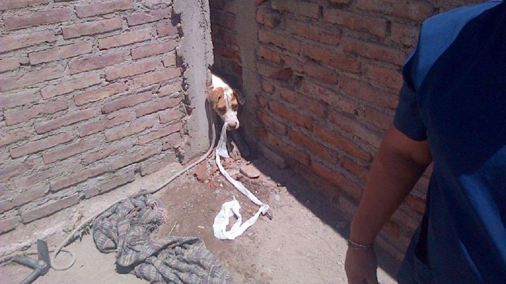 Emotivo rescate de Toto, un perro asustado por la pirotecnia que quedó atrapado