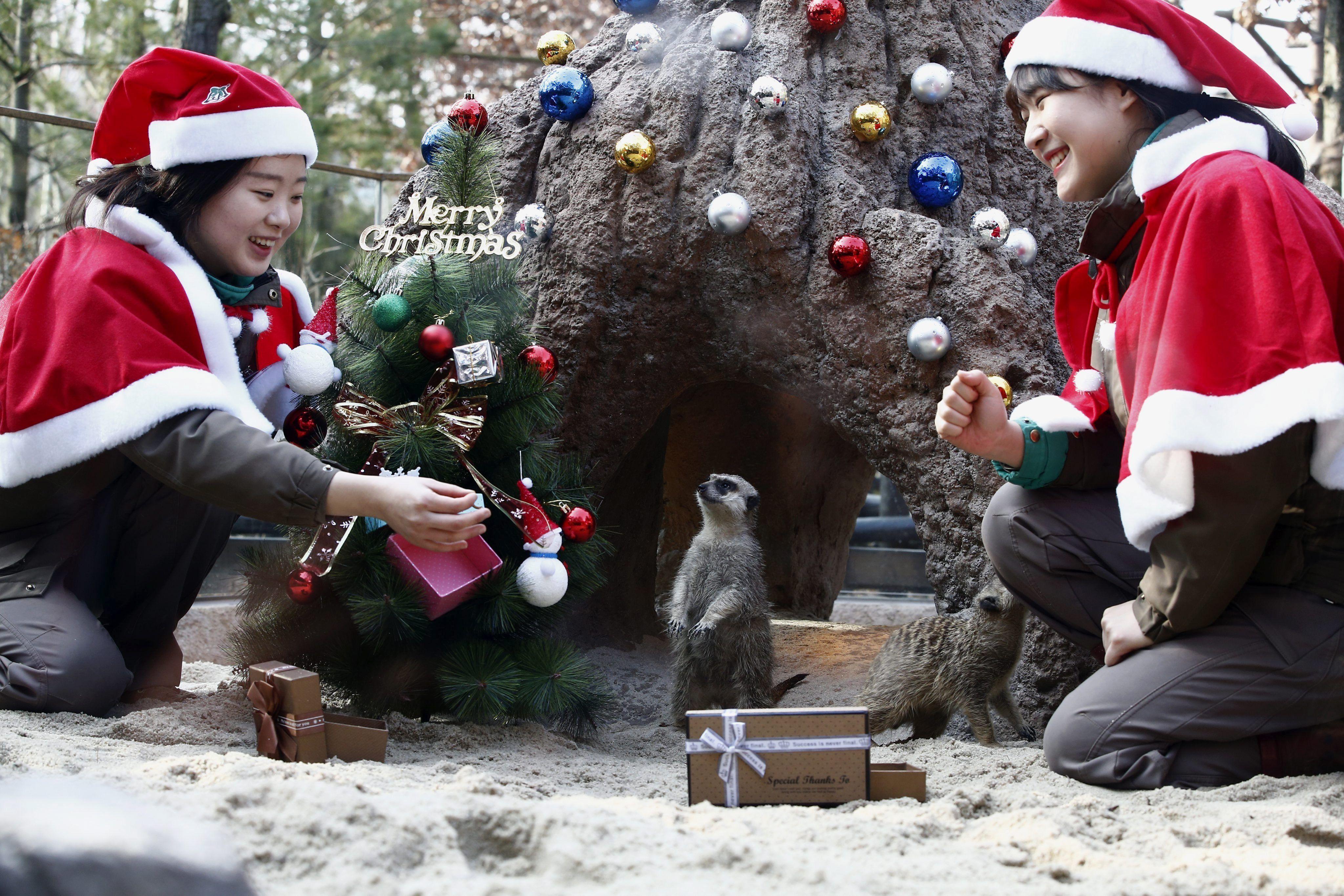 Así se vivió la Navidad en el mundo