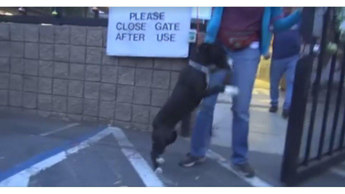 Para llorar: un perro se vuelve loco cuando se da cuenta que lo adoptaron