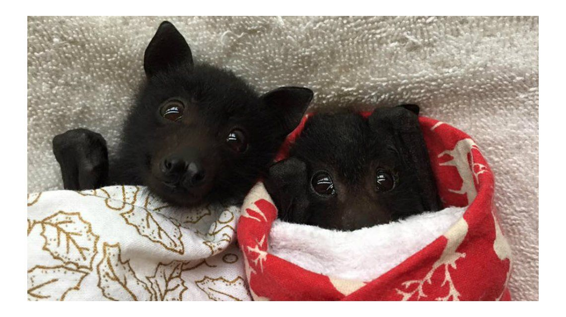 Estos cachorros revolucionaron la web con su ternura pero ¿qué son?