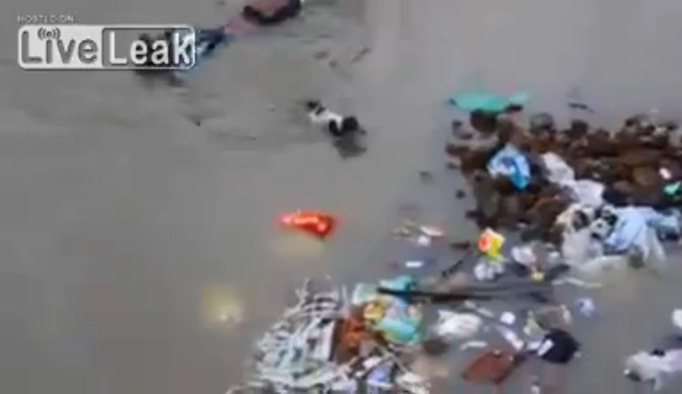 Una perra salva a sus cachorros durante una inundación: mirá el video