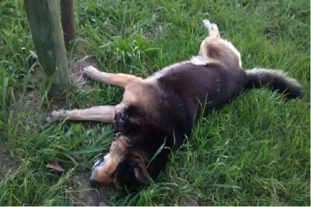 Denuncian envenenamiento de perros en Luján: ya murieron 5 animales
