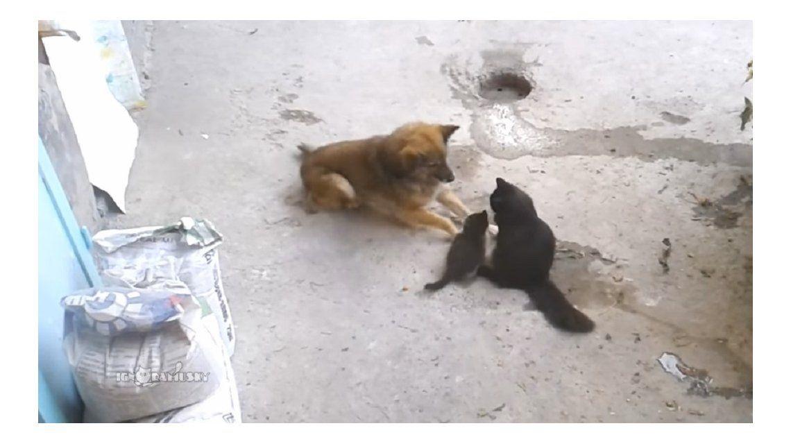 Un perro muere de amor por los gatitos de su amiga y se gana la web