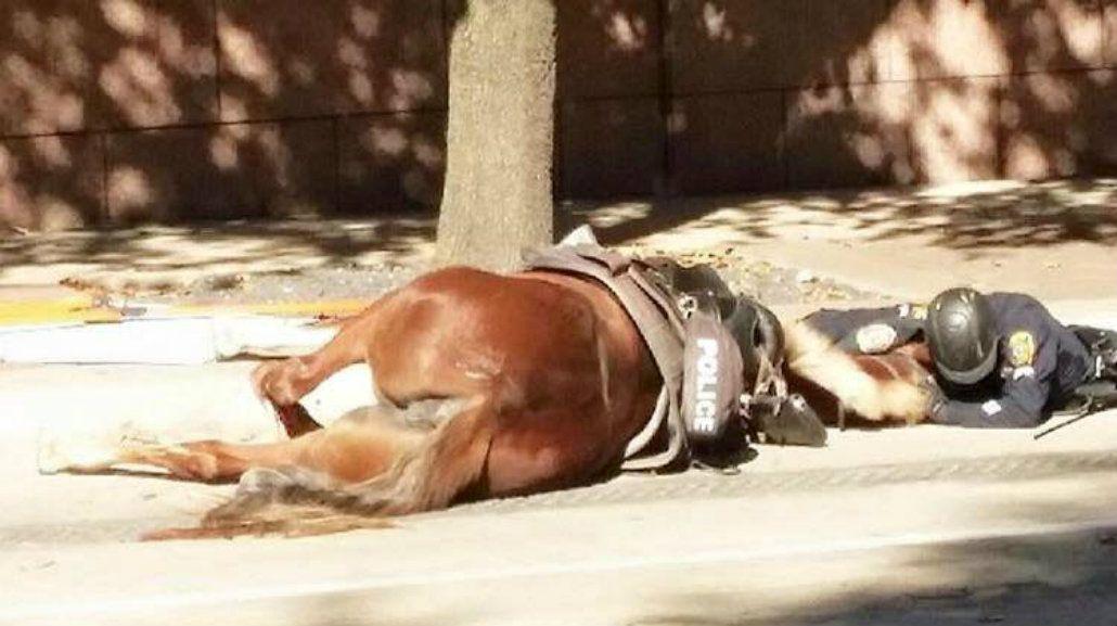 Compañeros hasta el final: la emotiva foto de un policía despidiendo a su caballo